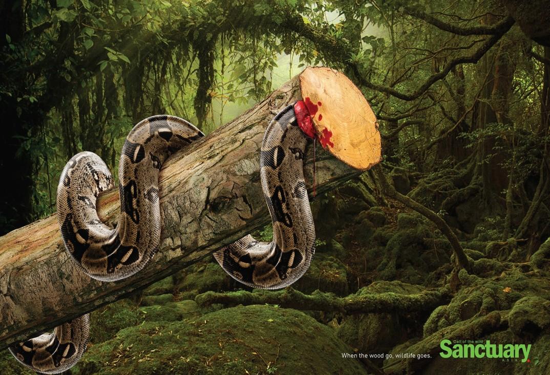 pubblicità-deforestazione-animali-sanctuary-asia-adeeve-3