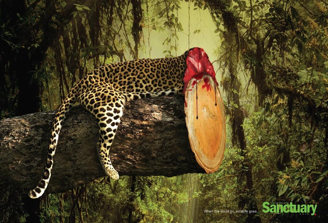 pubblicità-deforestazione-animali-sanctuary-asia-adeeve-4