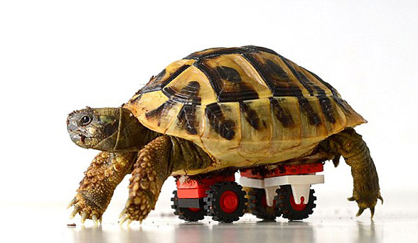 tartaruga-sedia-a-rotelle-lego-carsten-plischke-1