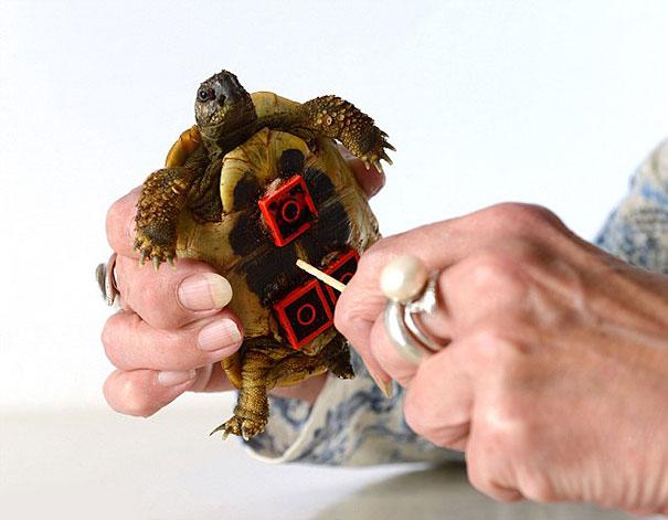 tartaruga-sedia-a-rotelle-lego-carsten-plischke-3