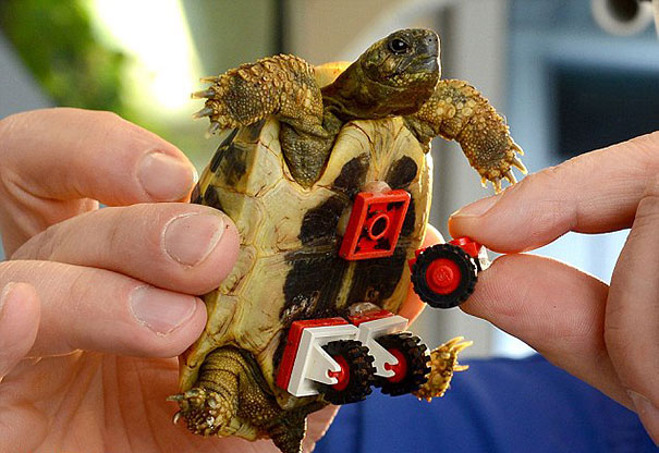 tartaruga-sedia-a-rotelle-lego-carsten-plischke-4