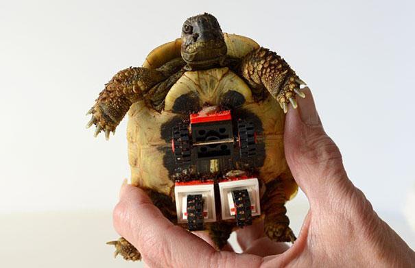 tartaruga-sedia-a-rotelle-lego-carsten-plischke-5