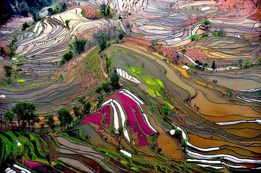 terrazze-campi-di-riso-14