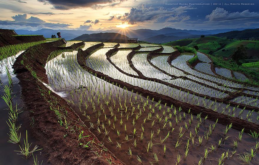 terrazze-campi-di-riso-19