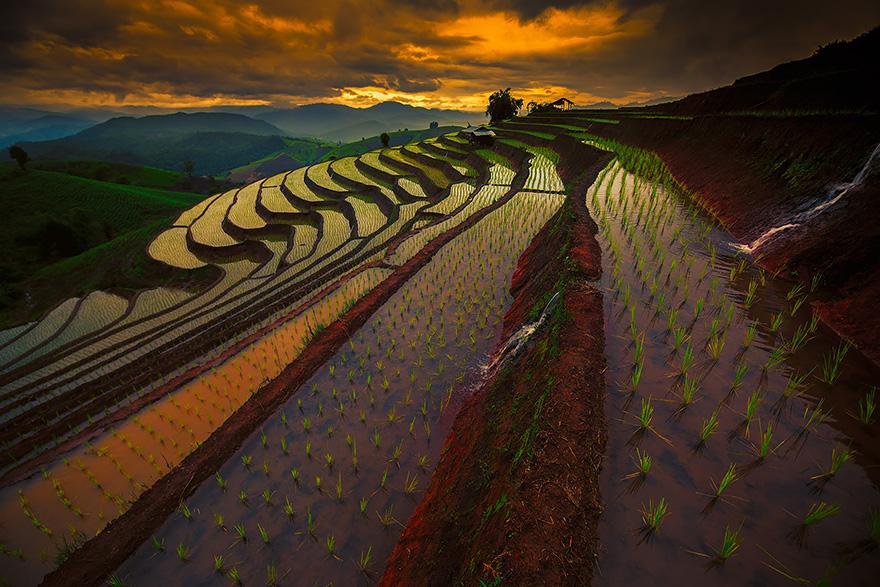 terrazze-campi-di-riso-20