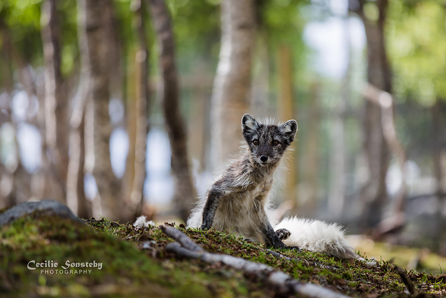 volpi-specie-mondo-fotografia-04