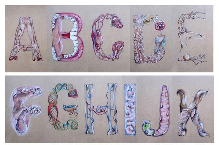 alfabeto-illustrato-anatomia-umana-laura-facci-2