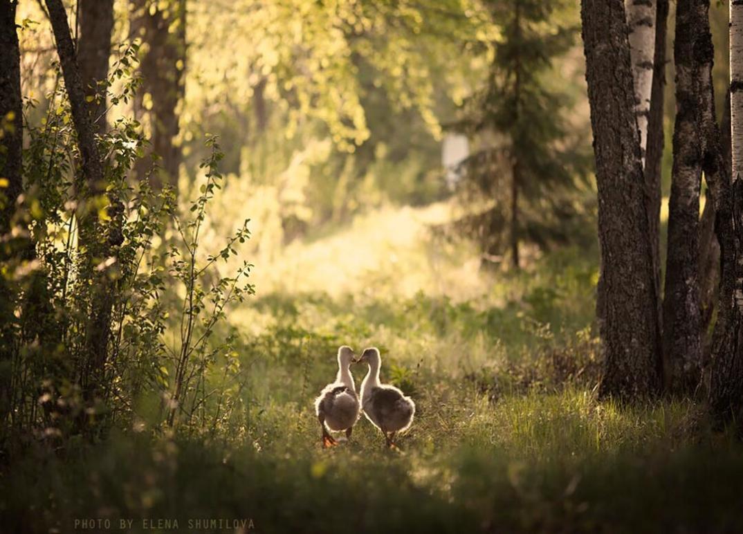 animali-bambini-fotografia-elena-shumilova-10