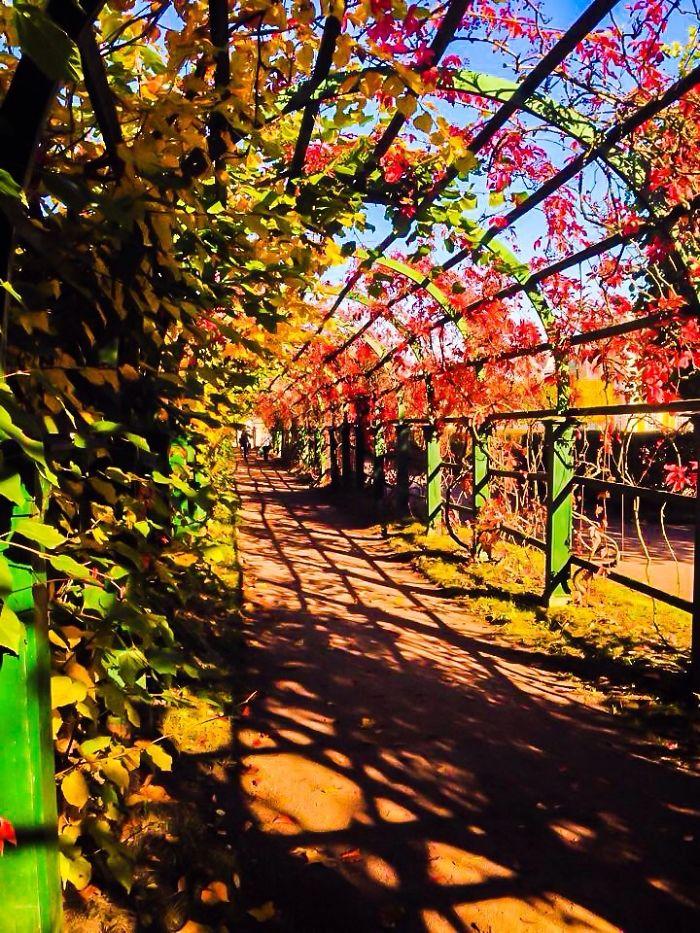 Strade con fiori e alberi nel mondo