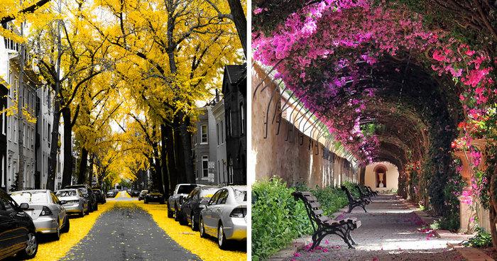 29 tra le più magiche strade del mondo all'ombra di fiori e alberi