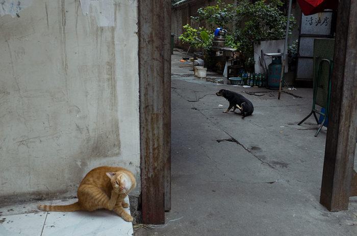 fotografo-autodidatta-cinese-scene-di-strada-divertenti-16