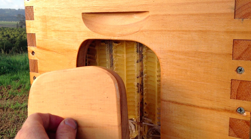 arnia-api-miele-invenzione-rubinetto-2