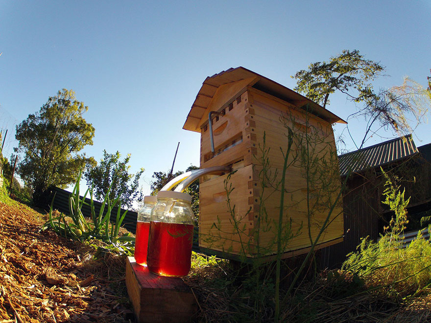 arnia-api-miele-invenzione-rubinetto-7