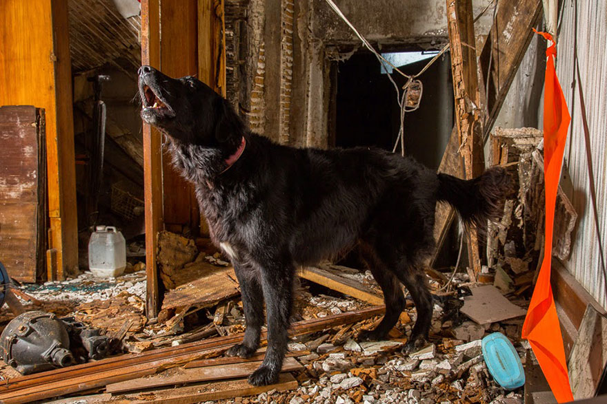 cani-lavoro-soccorso-pastori-foto-andrew-fladeboe-07