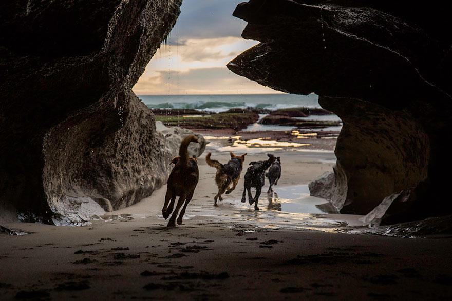 cani-lavoro-soccorso-pastori-foto-andrew-fladeboe-19