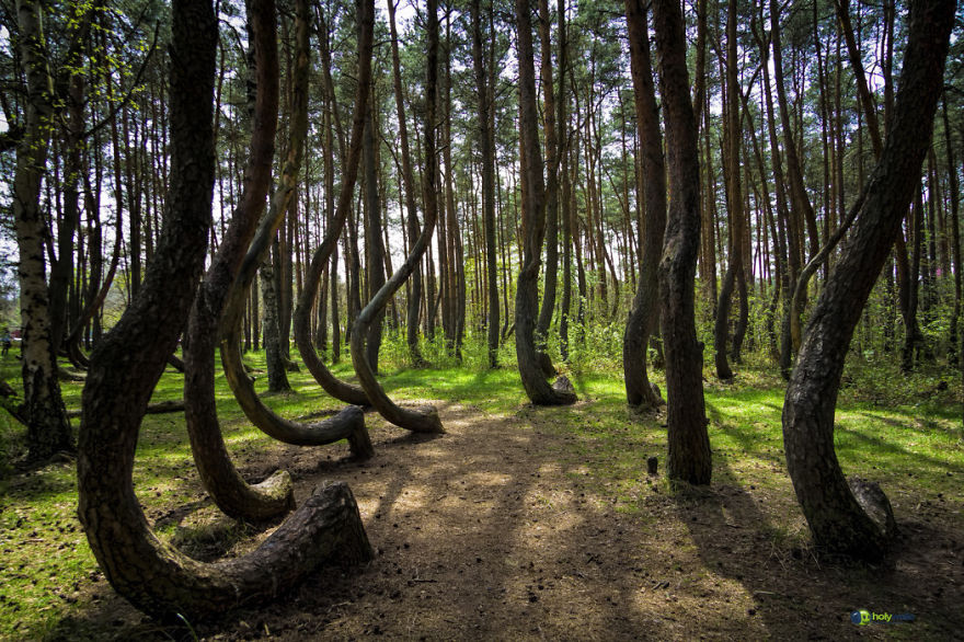crooked-forest4__880