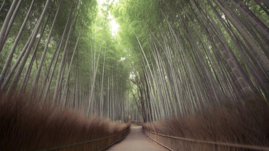 foreste-più-belle-e-misteriose-mondo-01