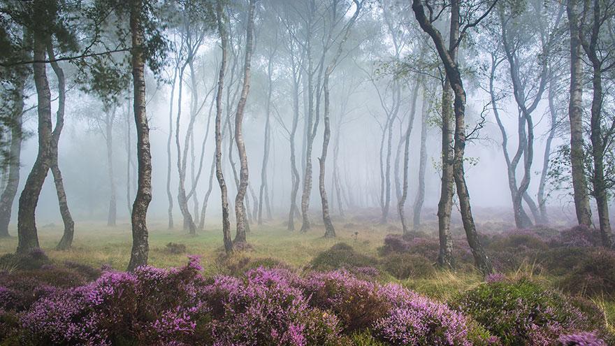 foreste-più-belle-e-misteriose-mondo-05