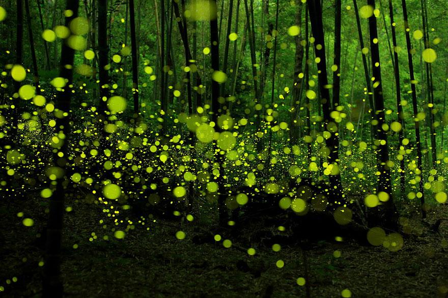 foreste-più-belle-e-misteriose-mondo-07