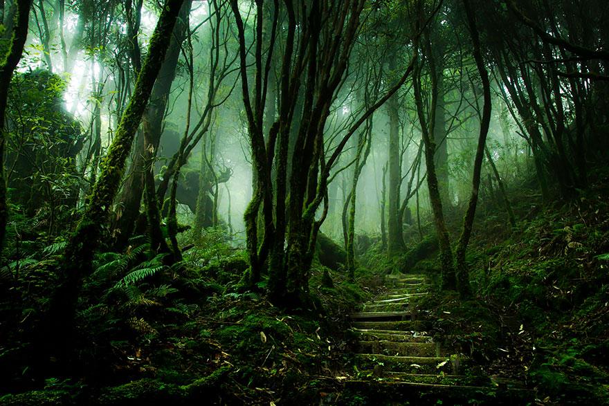 foreste-più-belle-e-misteriose-mondo-08