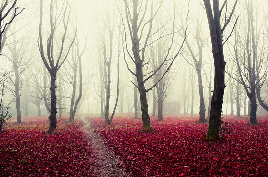 foreste-più-belle-e-misteriose-mondo-09