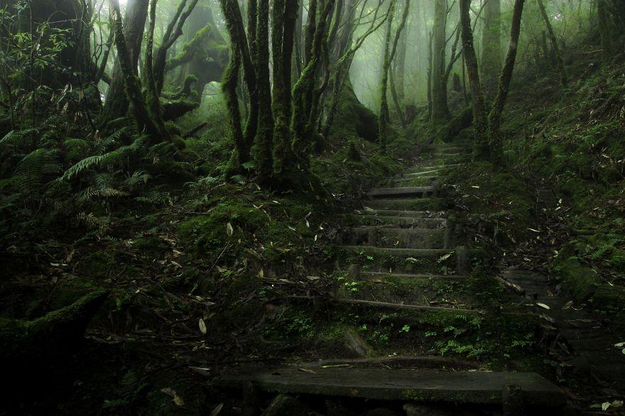 foreste-più-belle-e-misteriose-mondo-12