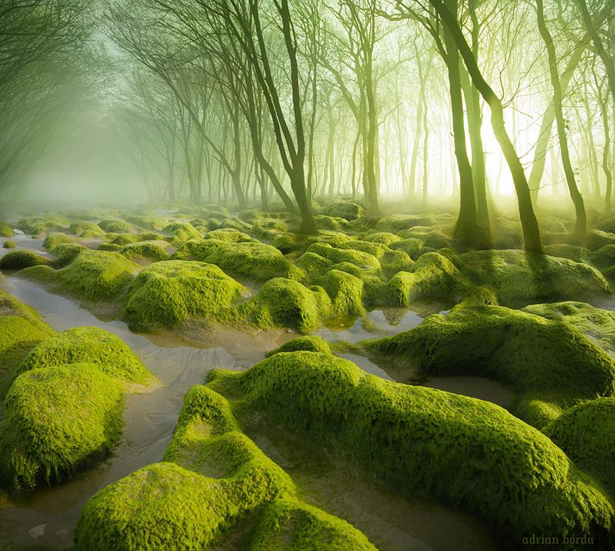 foreste-più-belle-e-misteriose-mondo-13