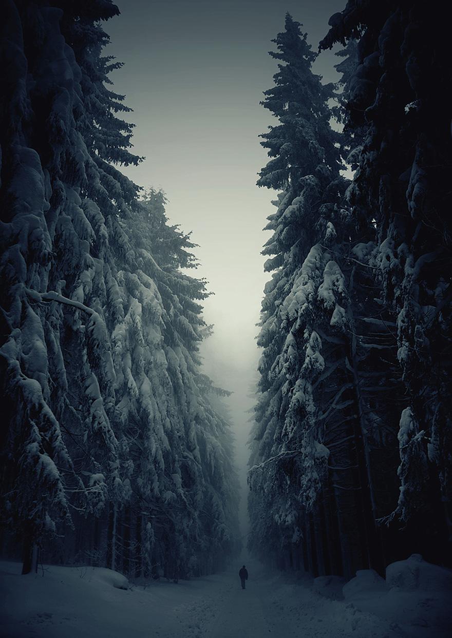 foreste-più-belle-e-misteriose-mondo-15