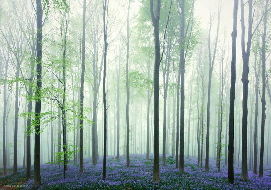 foreste-più-belle-e-misteriose-mondo-16