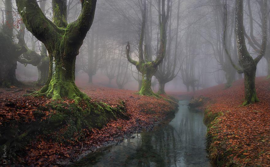 foreste-più-belle-e-misteriose-mondo-17