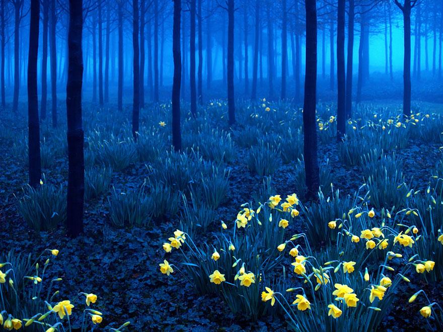 foreste-più-belle-e-misteriose-mondo-19