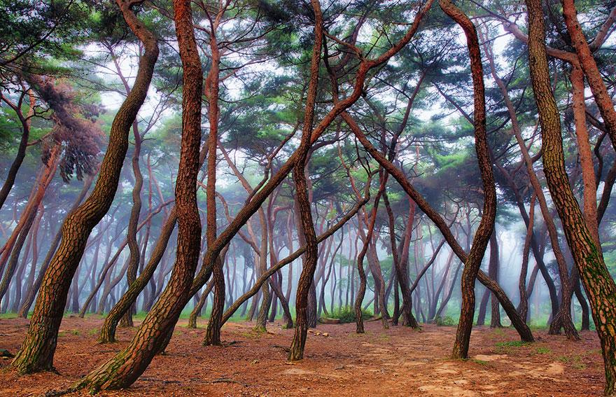 foreste-più-belle-e-misteriose-mondo-20