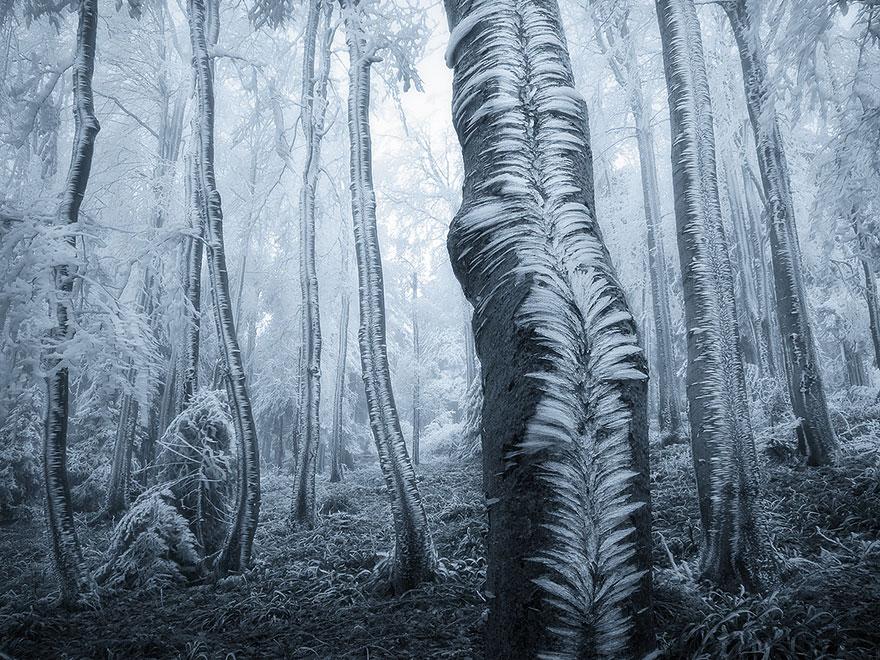 foreste-più-belle-e-misteriose-mondo-21