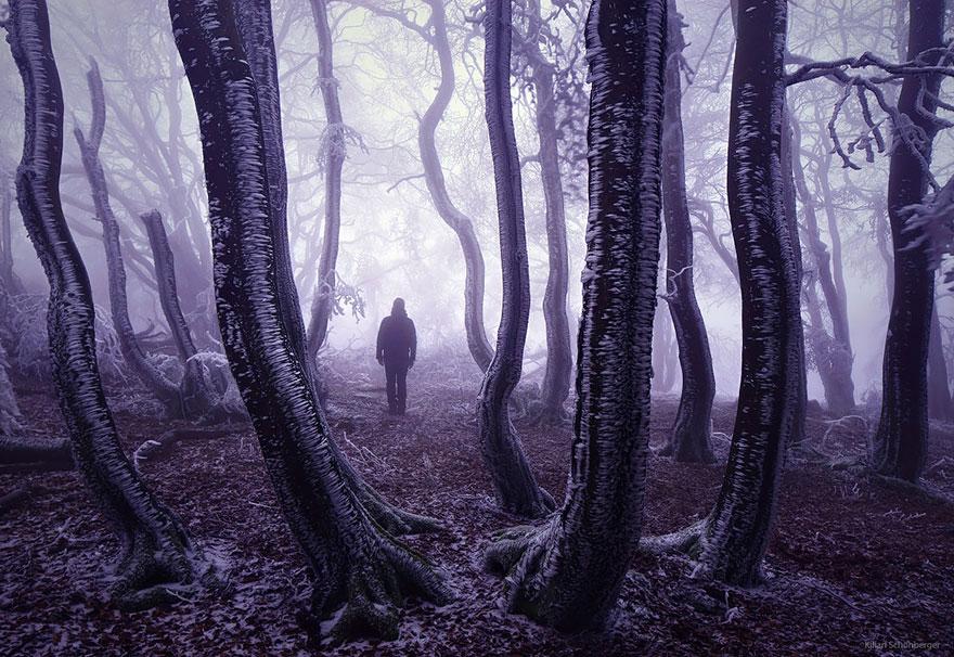foreste-più-belle-e-misteriose-mondo-22