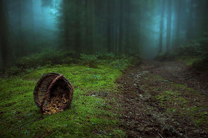 foreste-più-belle-e-misteriose-mondo-25