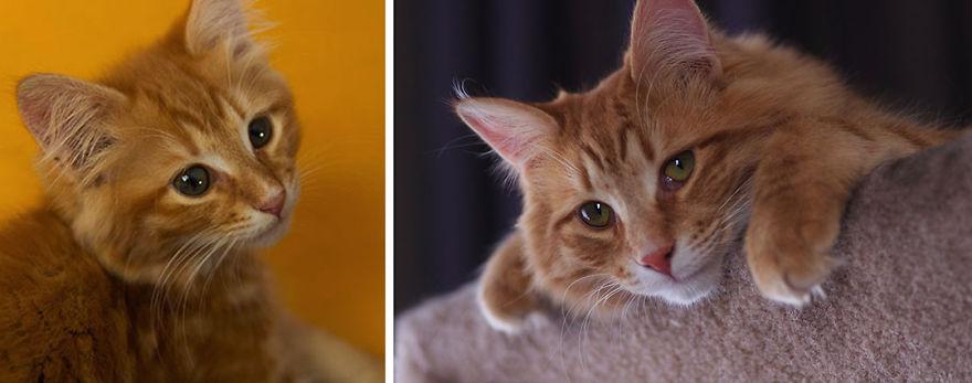 foto-di-gatti-che-crescono-prima-e-dopo-02
