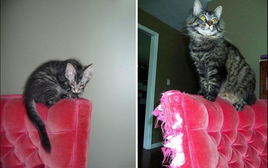 foto-di-gatti-che-crescono-prima-e-dopo-05