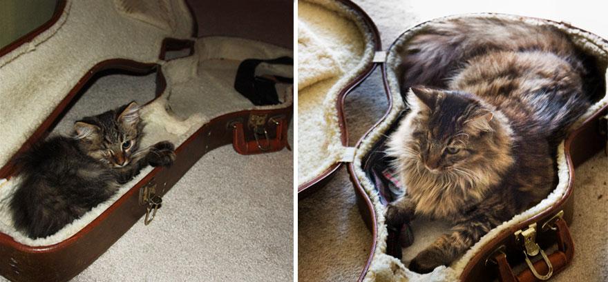 foto-di-gatti-che-crescono-prima-e-dopo-06
