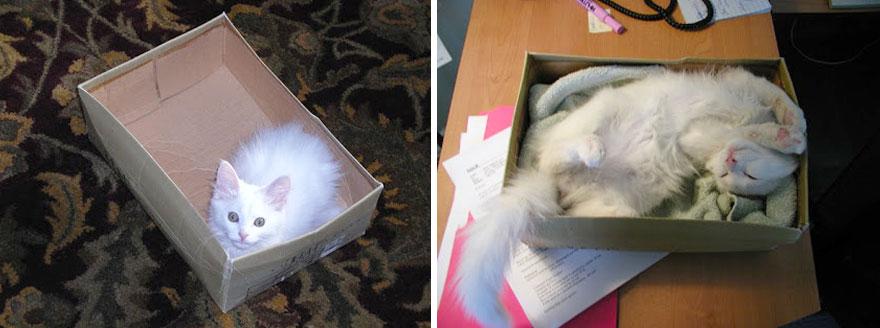 foto-di-gatti-che-crescono-prima-e-dopo-09