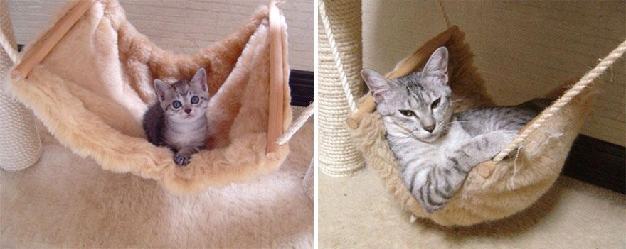 foto-di-gatti-che-crescono-prima-e-dopo-13