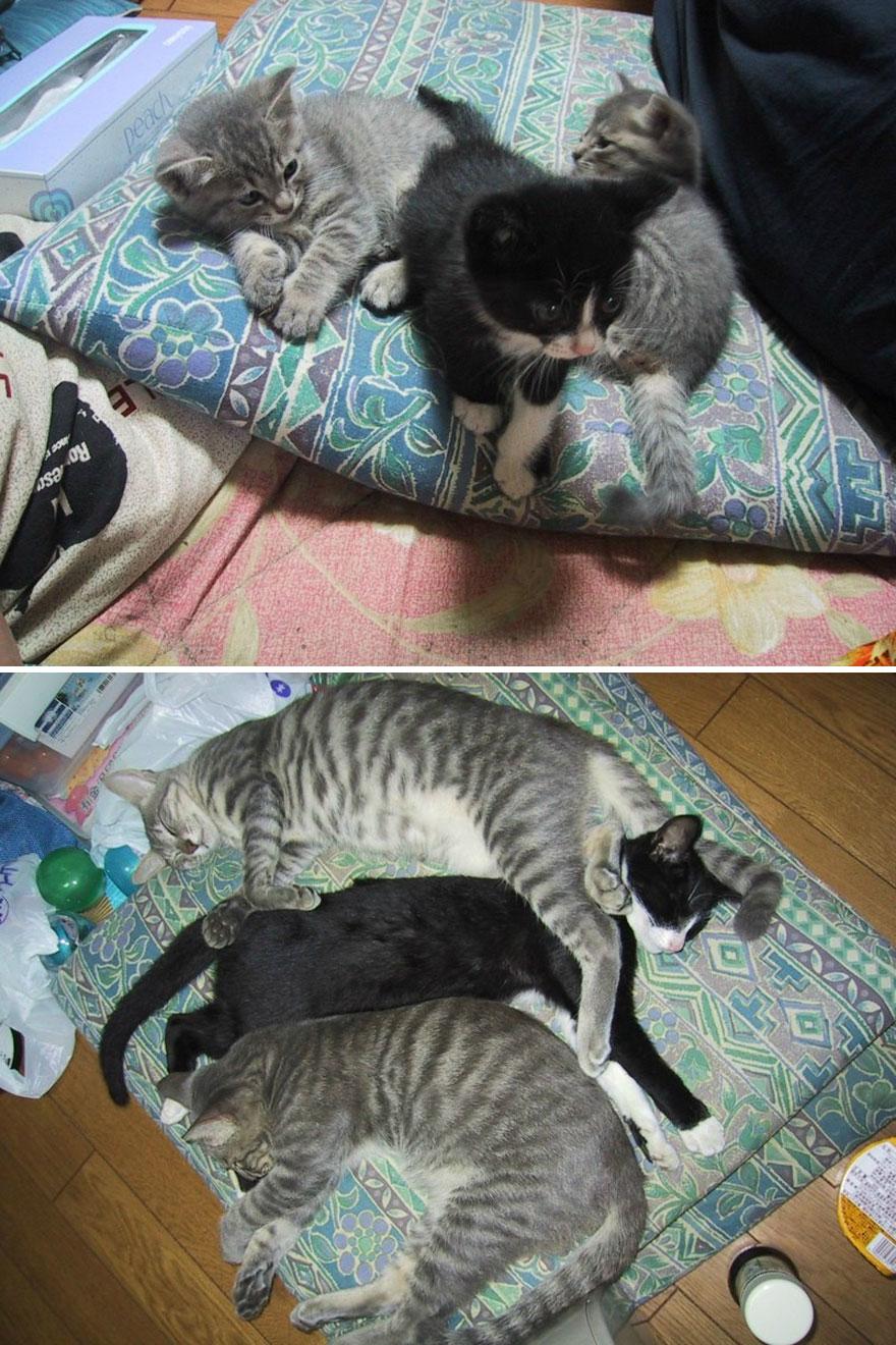 foto-di-gatti-che-crescono-prima-e-dopo-14