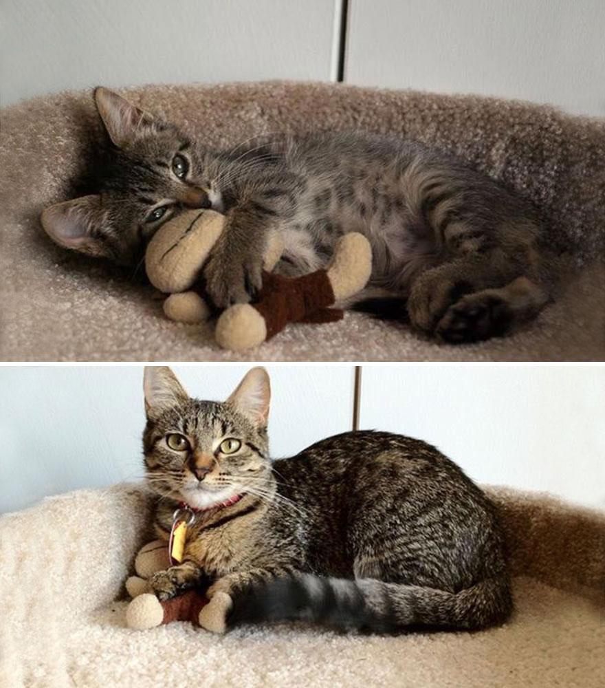 foto-di-gatti-che-crescono-prima-e-dopo-15