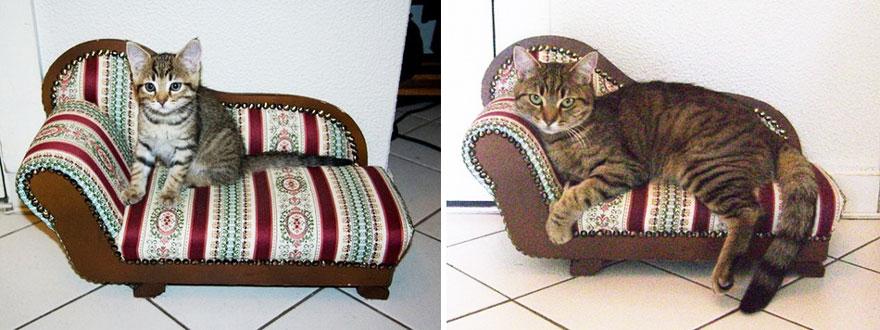 foto-di-gatti-che-crescono-prima-e-dopo-16