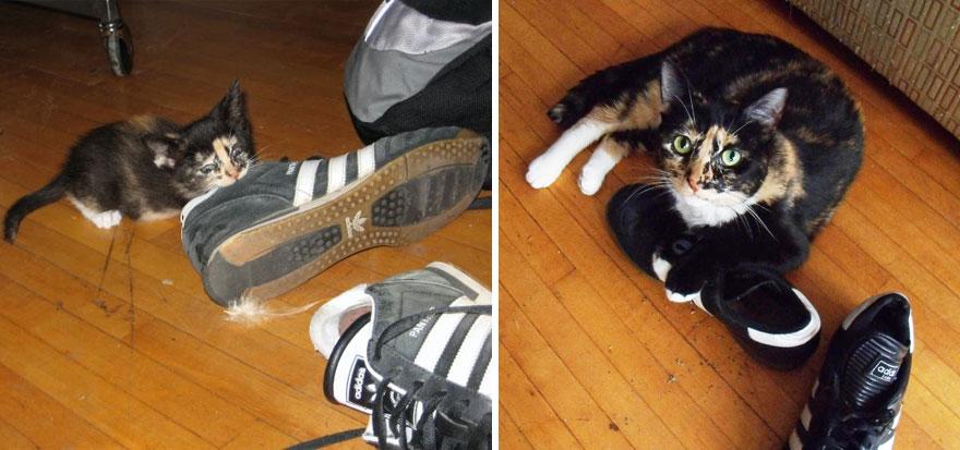 foto-di-gatti-che-crescono-prima-e-dopo-18