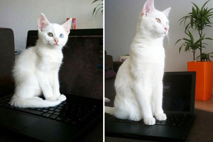 foto-di-gatti-che-crescono-prima-e-dopo-23