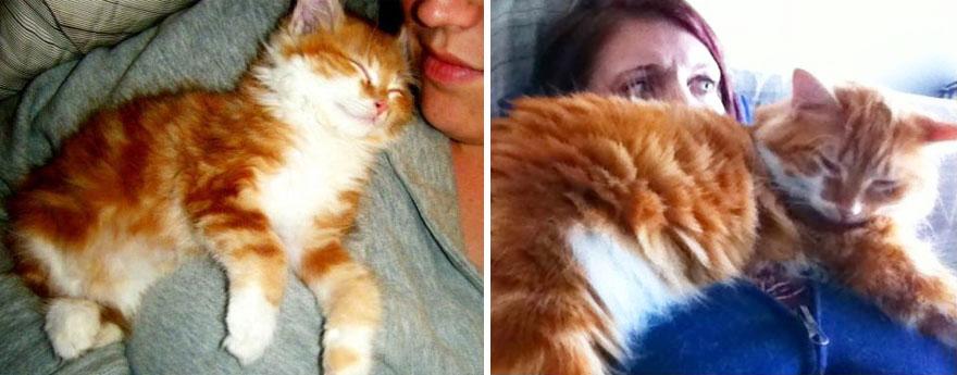 foto-di-gatti-che-crescono-prima-e-dopo-27