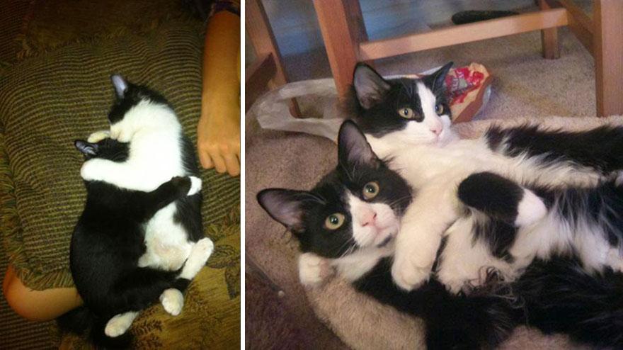 foto-di-gatti-che-crescono-prima-e-dopo-28