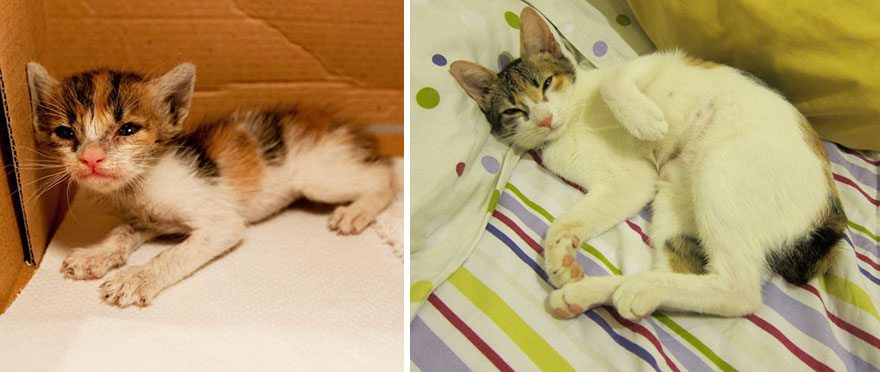 foto-di-gatti-che-crescono-prima-e-dopo-29