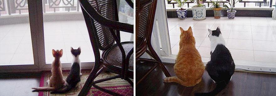 foto-di-gatti-che-crescono-prima-e-dopo-31
