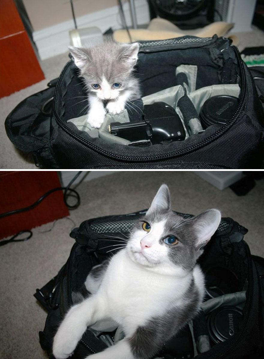foto-di-gatti-che-crescono-prima-e-dopo-34